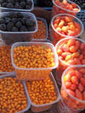Fruits de mûre, d'argousiers et de cynorrhodons Photographie stock