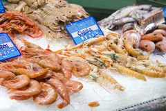 Fruits de mer Photo libre de droits