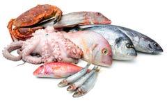 Fruits de mer d'isolement sur le fond blanc Image stock