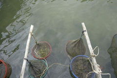 Fruits de mer dans le village de pêche de Ham Ninh de petit paquet, mer agréable/plage dans Phu Quoc photographie stock libre de droits