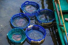 Fruits de mer dans les buskets Photographie stock libre de droits