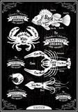 Fruits de mer de carcasses de coupe de diagramme de vecteur Photographie stock libre de droits