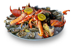 fruits de mer de champ de cablage à couches multiples Photo stock