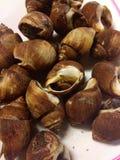 Fruits de mer de Shell Photo stock