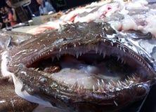 Fruits de mer et océan, coquilles, poissons, créatures de mer, glace, neige, marché, vente, froid, fraîcheur, acné, mollusques, l Photos stock