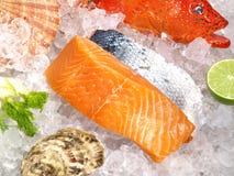 Fruits de mer et poissons sur la glace photo libre de droits