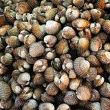 Fruits de mer : Feston images libres de droits