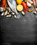 Fruits de mer frais Photographie stock