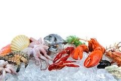 Fruits de mer frais sur la glace écrasée image libre de droits