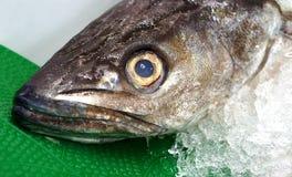 Fruits de mer frais - vue étroite de la tête de la merluche images stock