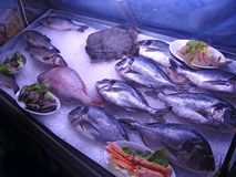 Fruits de mer sur la glace Photo stock