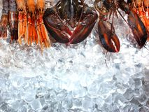 Fruits de mer sur la glace Images stock