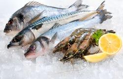 Fruits de mer sur la glace images libres de droits