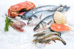 Fruits de mer sur la glace Image stock