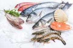 Fruits de mer sur la glace Photo libre de droits