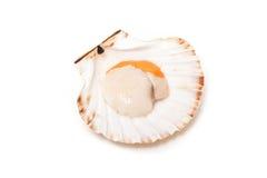 Fruits de mer sur le seashell images stock