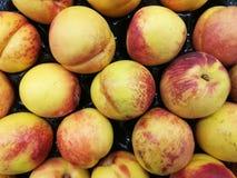 Fruits de nectarines Images libres de droits