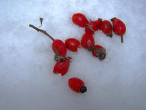 fruits de neige Image stock