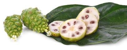Fruits de Noni sur le fond d'isolement par blanc images libres de droits