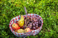 Fruits de panier de pique-nique Photographie stock
