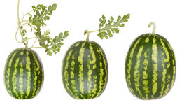 Fruits de pastèque avec des lames Photographie stock