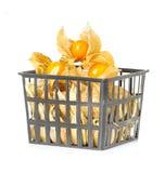 Fruits de Physalis dans le panier en plastique Photographie stock
