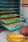 Fruits de séchage dans la machine de séchage Images stock