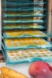 Fruits de séchage dans la machine de séchage Photographie stock
