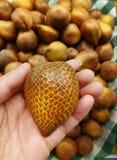 Fruits de serpent dans la main Photo stock