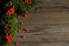 Fruits de sorbe et de cônes sur la mousse verte Image stock