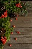 Fruits de sorbe et de cônes sur la mousse verte Photo stock