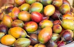 Fruits de tamarillo Images stock