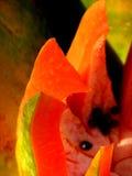 Fruits de tentation Photo stock