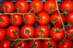 Fruits de tomate Images stock