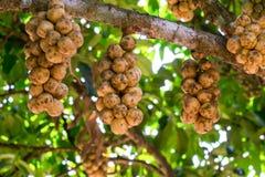 Fruits de Wollongong Image libre de droits