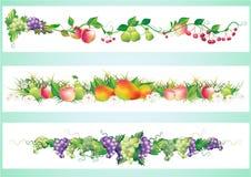 Fruits diet border vector illustration
