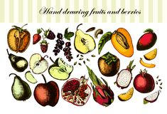 Fruits et baies de dessin de main Photos stock