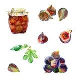 Fruits et confiture d'aquarelle Images libres de droits