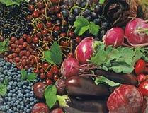 Fruits et légumes bleus Image stock
