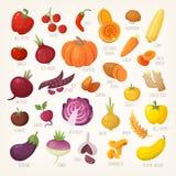 Fruits et légumes colorés avec des noms illustration de vecteur