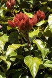 Fruits et légumes exotiques du Pérou images stock