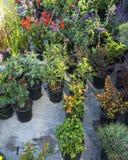 Fruits et légumes organiques sur le marché d'agriculteurs : Wilson Park, T images stock