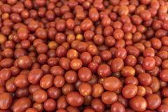 Fruits et légumes organiques sur le marché d'agriculteurs : Wilson Park, T images libres de droits