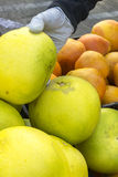 Fruits et légumes organiques sur le marché d'agriculteurs : Wilson Park, T Photos libres de droits