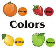 Fruits et ronds Illustration de Vecteur