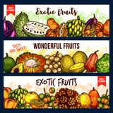 Fruits from exotic countries, sketch vector vector illustration