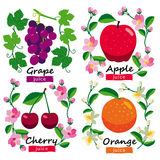 Fruits and flowers collection. Stock Photos