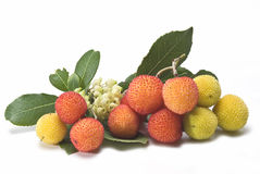Fruits with flowers and leaves. Fruits with flowers and leaves on one arbutus branch Stock Image