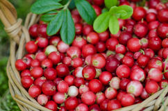 Fruits of forest (berries) in basket Royalty Free Stock Photos