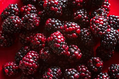 Fruits of the forest: blackberries Stock Photography